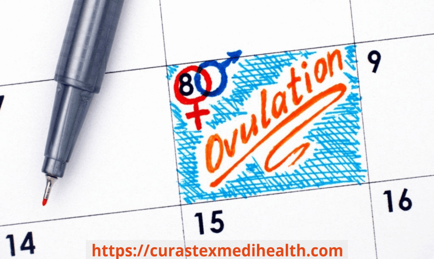 Ovulation- Symptoms, Disorders and Ways to track